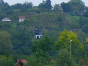 Weinberge in Ungarn am See